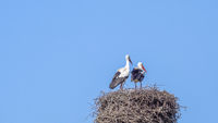 The storks are back!