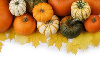 Many orange pumpkins