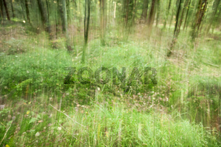 Forest clearing with stripes