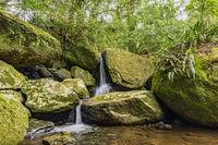 Small waterfall among the rainforest vegetation of Ilhabela island