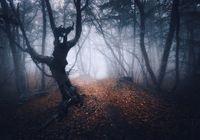 Dark foggy forest. Mystical autumn forest with trail in fog