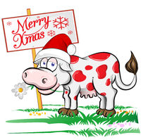 cow Santa Claus with merry christmas signboard. Isolated  illustration.
