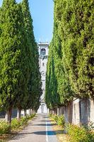 Cypress trees avenue Brescia Lombardy Italy