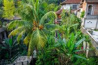 Houses in jungle, Ubud, Bali, Indonesia