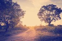 Road In Botswana