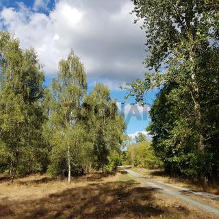 Waldweg im Naturpark Barnim