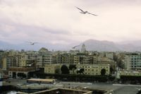Flying seagulls and Palermo view, Italy