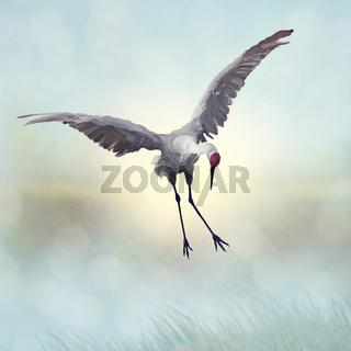Sandhill Crane painting