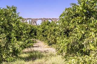 Lime Orchard and Roman Viaduct, Perge, Turkey