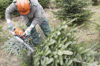 Christmas tree, Christmas trees,