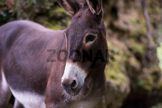 Donkey in the woods