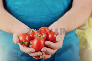 Farmer hold fresh organic tomatoes in his hands. Vegetable harvest concept