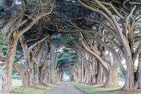 Signature Cypress Tree Tunnel in Inverness.