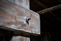 wood planks conncected with rusty screw closeup  in attic / loft - construction concept