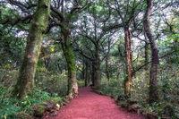 Bijarim forest trail