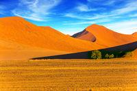 Dunes of the Namib desert
