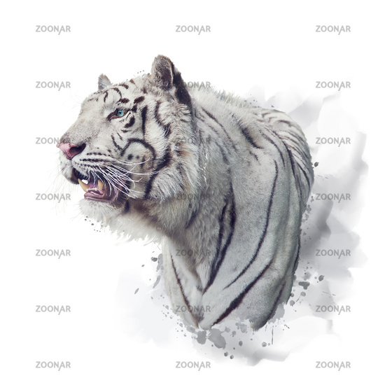 White tiger watercolor illustration on white