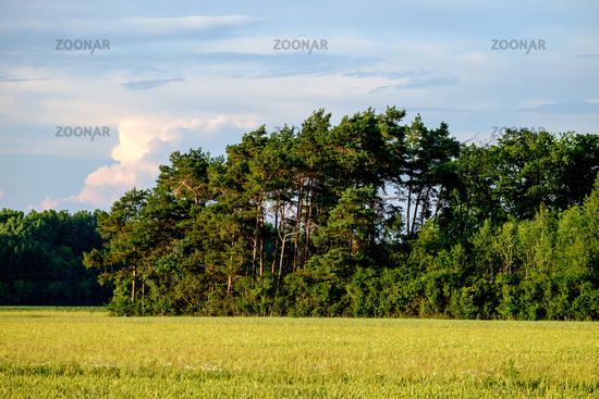 Image of a field with trees an blue sky with clouds