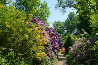 Landscape with rhododendron