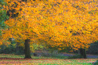 Red, orange and yellow leaves on trees