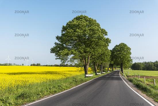 country road, grove, Kuehlungsborn, Mecklenburg-Western Pomerania, Germany, Europe