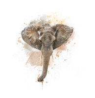 Elephant Head watercolor