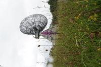 Museum historische Radiosternwarte Stockert, im Vordergrund eine Grosse Händelwurz oder Mücken-Händelwurz (Gymnadenia conopea)