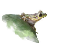 Green Frog on a cactus, watercolor