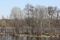 Small island in the lake Amtssee at former monastery Chorin
