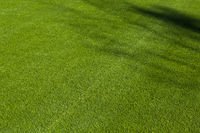 Newly Installed Artificial Grass