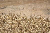 dried hemp seeds on grunge background