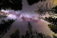 Purple Milky way falling stars pine trees silhouette