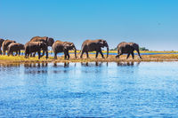 The Chobe National Park