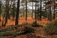 Lueneburger Heath