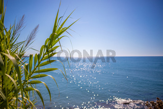 in the foreground is an oriental plant and in the background is the blue sea in beautiful weather