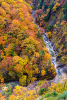 Aerial view of Autumn Fall River Landscape