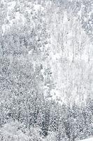winter Landscape Forest