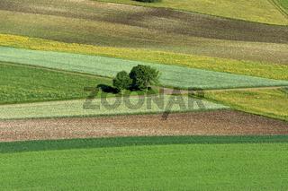 Landschaft auf der Schwaebischen Alb; Aecker; Wiesen; Felder; Baeume