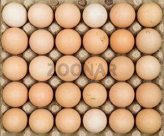 Free range chicken eggs in egg tray