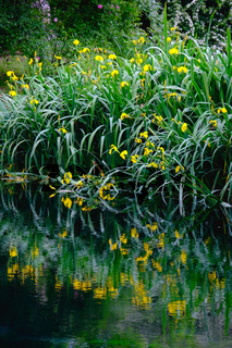 vertical flower reflections on water river shore impressionist garden pond grass