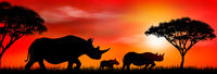 Group of african rhinos at sunset