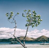 in the beautiful  island cosatline and tree