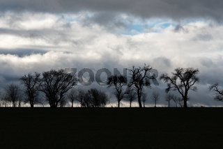 The tree row as silhouette with cloudy background
