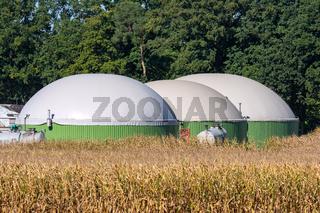 Alternative Energy with Bio Technology