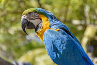 Macaw in the vegetation of the rainforest
