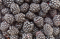 Blackberry fruit - blackberries. Background of very large blackberry fruit. Texture of black berry.