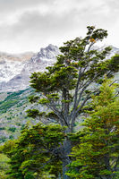 Natural landscape at Torres del Paine National Park in Southern Chilean Patagonia