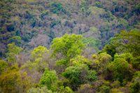 Rainforest in Ankarafantsika park, Madagascar
