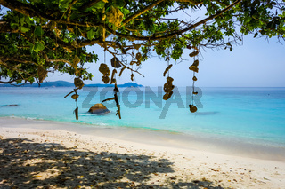 Hanging coral on Turtle Beach, Perhentian Islands, Terengganu, Malaysia