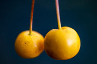 macro of two yellow berries isolated against a black background